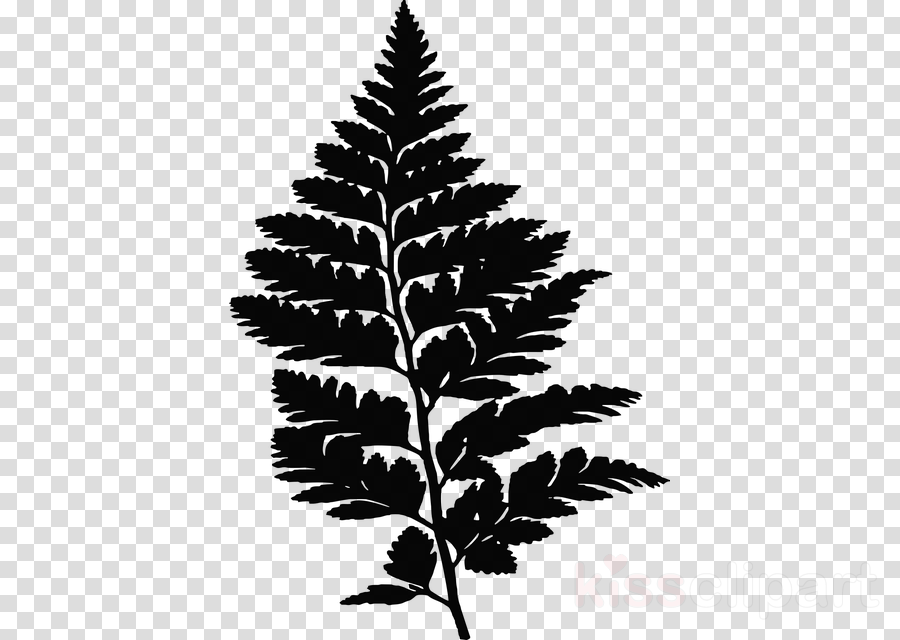 Fern Drawing Clip art Portable Network Graphics Image