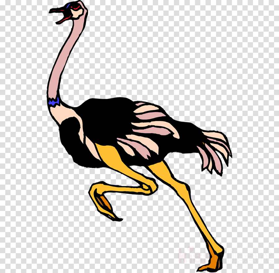 Common ostrich Bird Clip art Illustration Emu