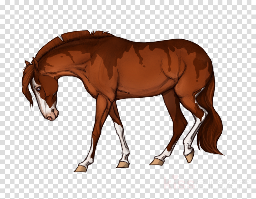 Mustang Foal Mare Stallion Colt