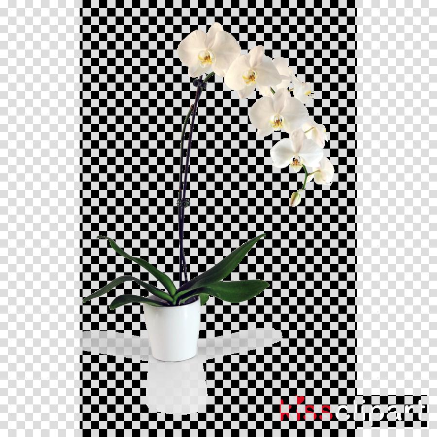 Moth orchids Clip art Flower Portable Network Graphics