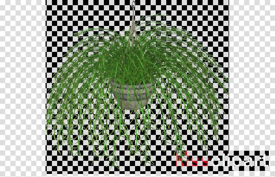 Clip art Fern Plants Palm trees Portable Network Graphics