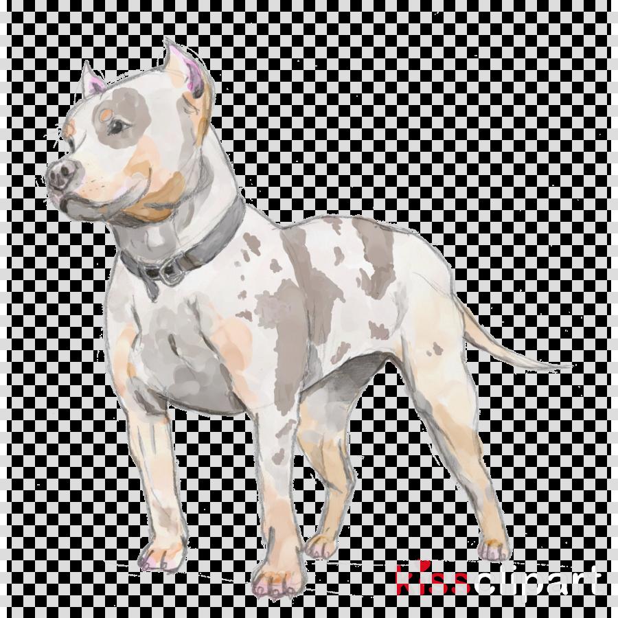 American Pit Bull Terrier American Staffordshire Terrier Staffordshire Bull Terrier Puppy