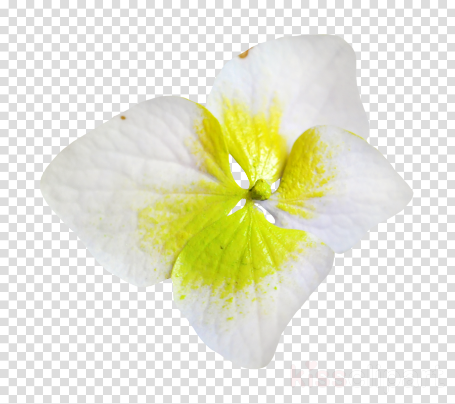 Petal White Moth orchids Portable Network Graphics Cyan