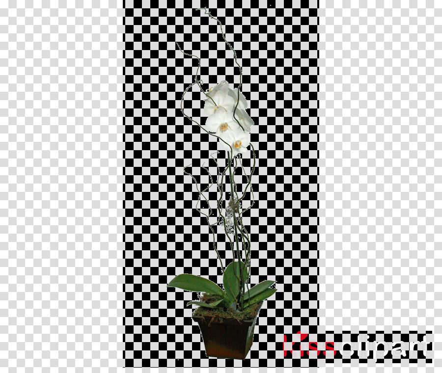 Moth orchids Floral design Cut flowers Flowerpot