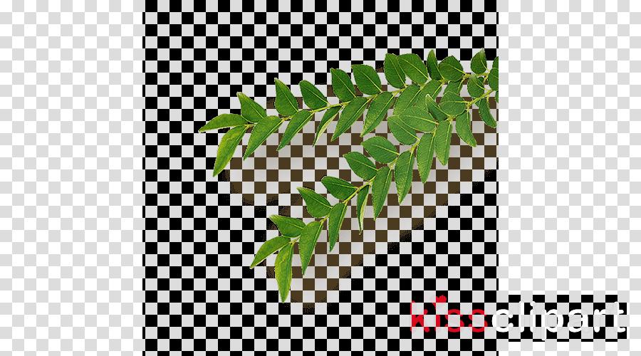 Neem Tree Portable Network Graphics Herb Leaf Clip art