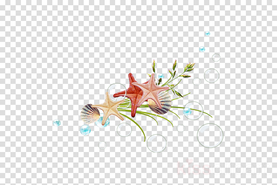 Graphic design Starfish Desktop Wallpaper Designer