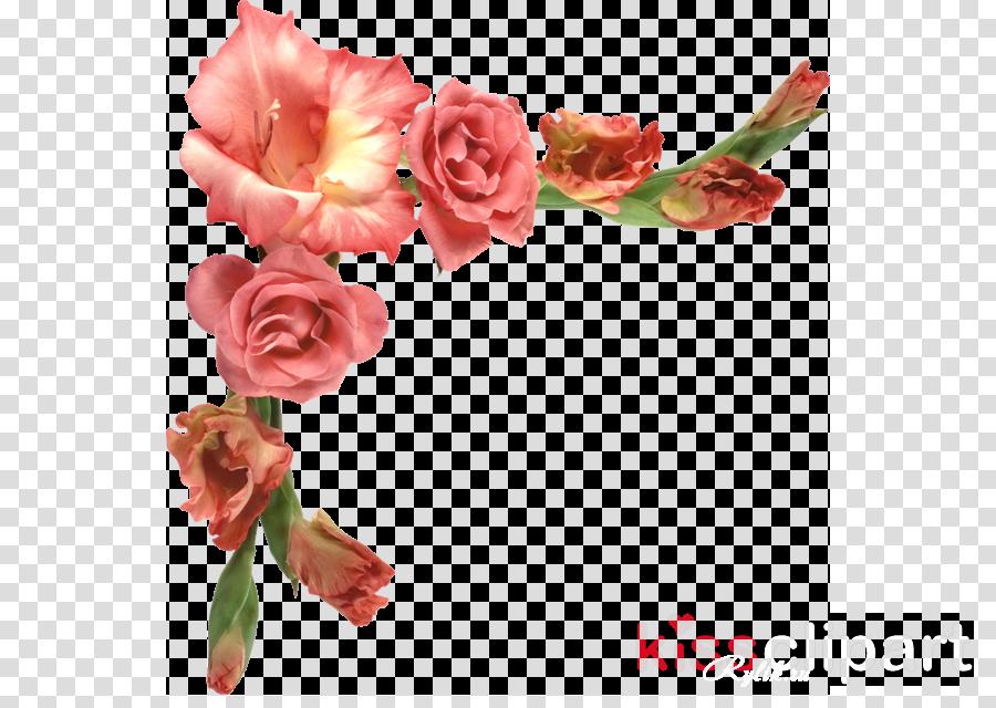 Carnation Rose Pink flowers Floral design
