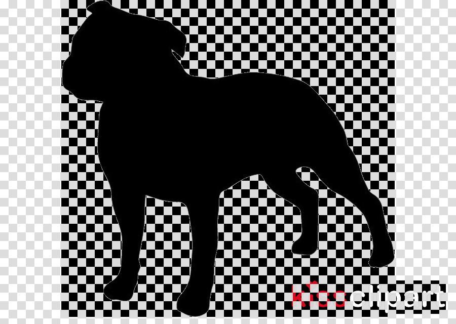American Bully American Pit Bull Terrier Bulldog Staffordshire Bull Terrier