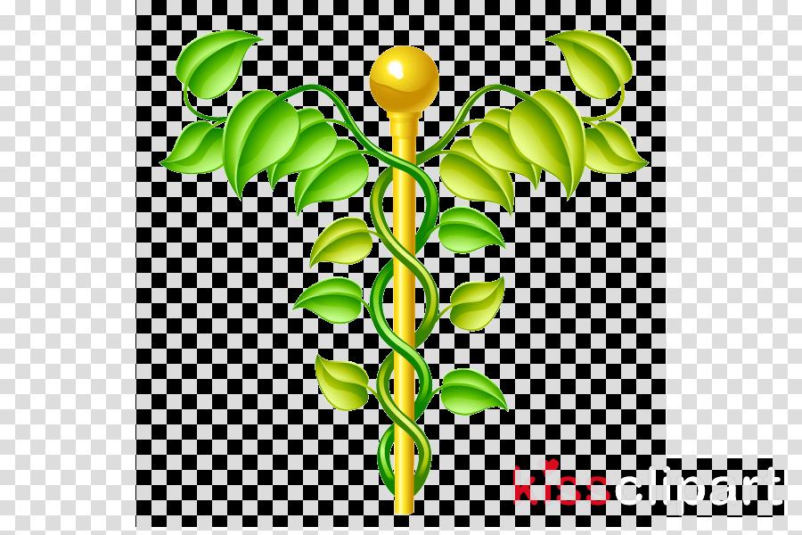 Alternative Health Services Medicine Staff of Hermes Herbalism Vector graphics