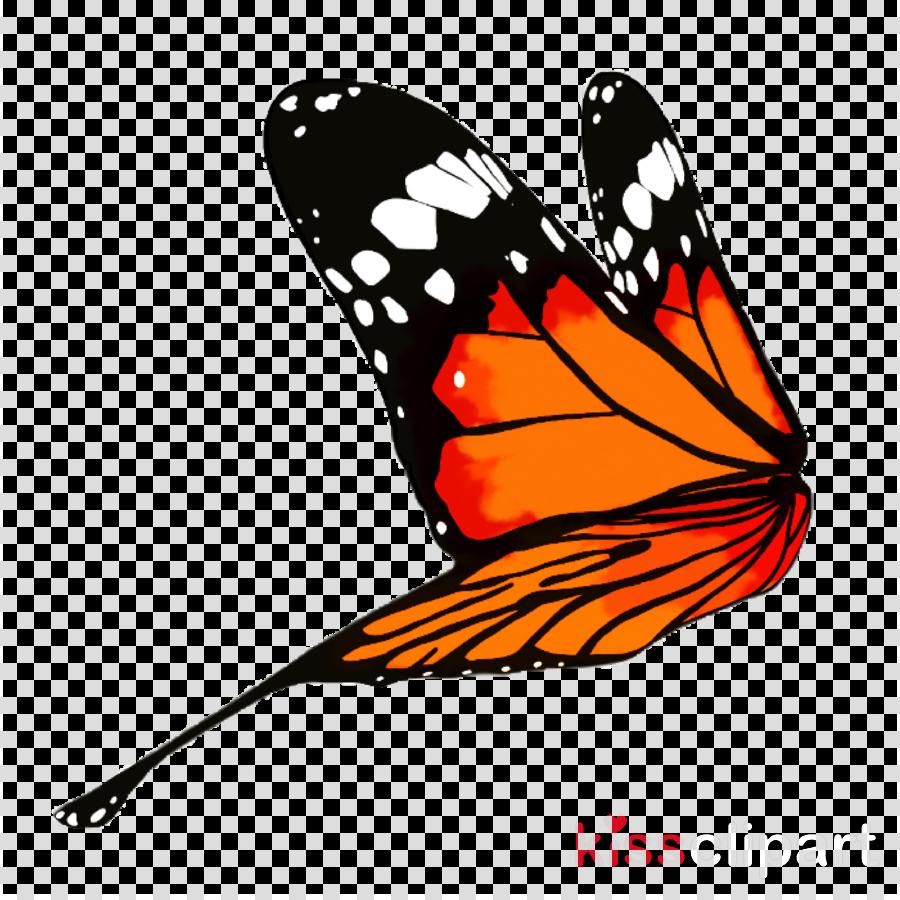 Butterfly Desktop Wallpaper Download Transparent Png