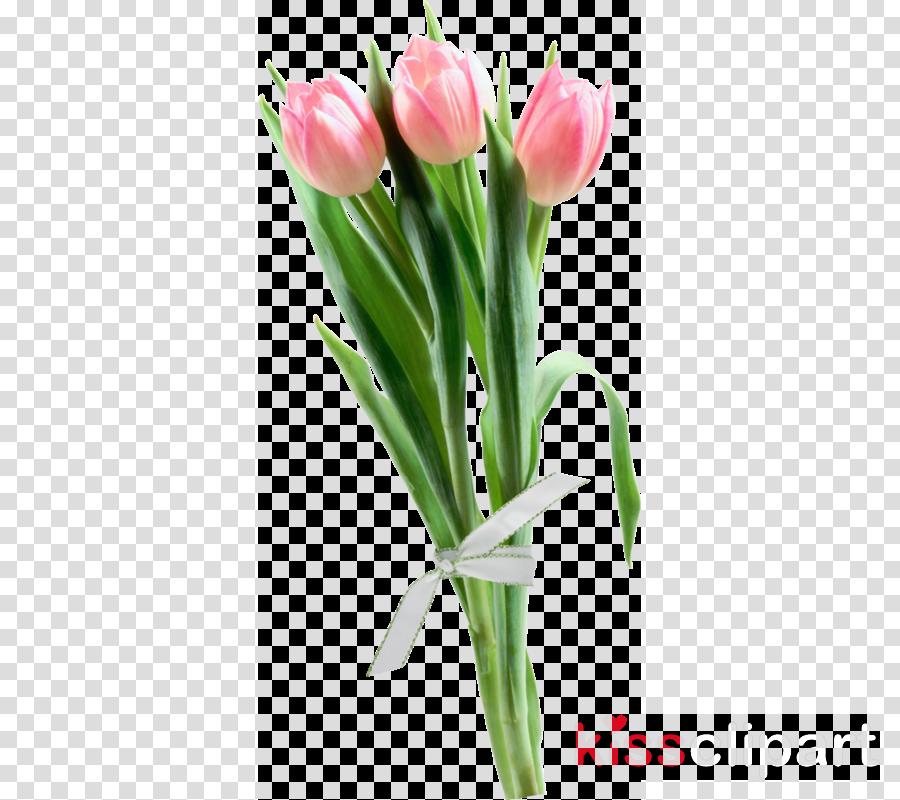 Tulip Flower Portable Network Graphics Clip art Image