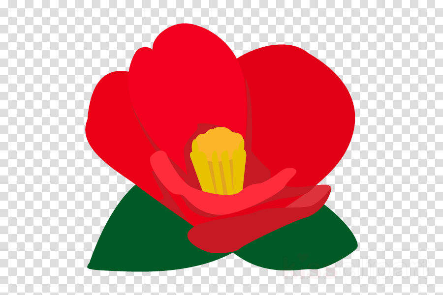 Japanese camellia Illustration Clip art Plants Flowering plant