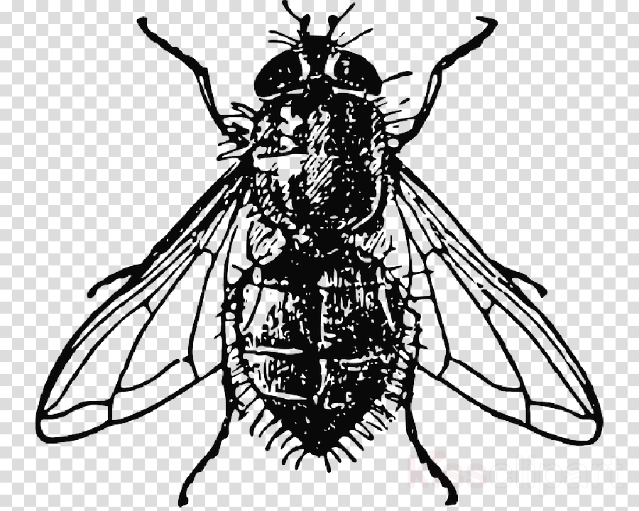 Drawing Housefly Vector graphics Clip art Insect