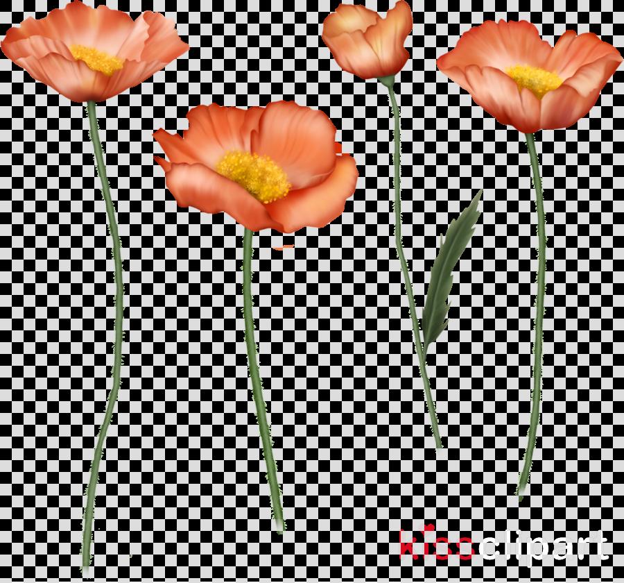 Clip art Portable Network Graphics JPEG Cut flowers Poppy