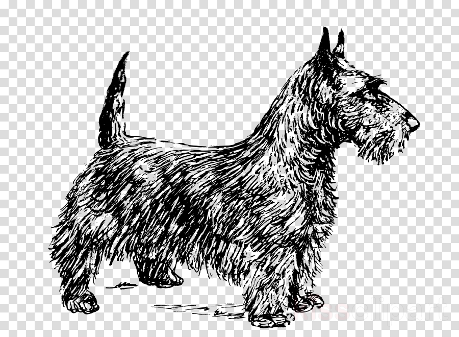 Scottish Terrier Yorkshire Terrier West Highland White Terrier Airedale Terrier Boston Terrier