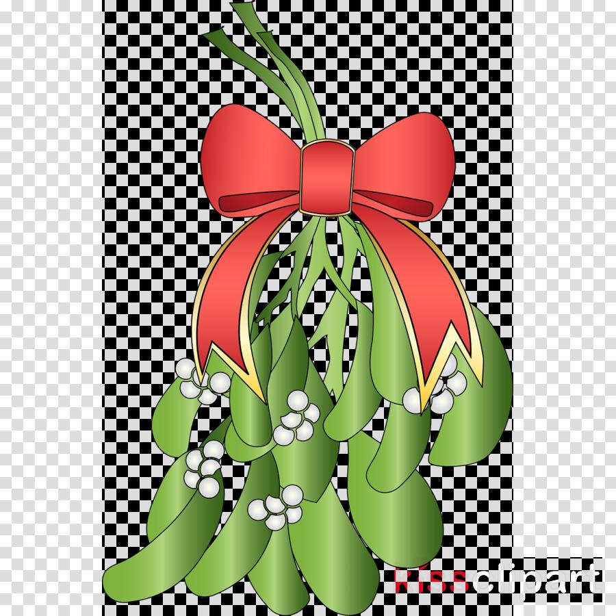 Christmas Day Mistletoe Viscum album Image Plants
