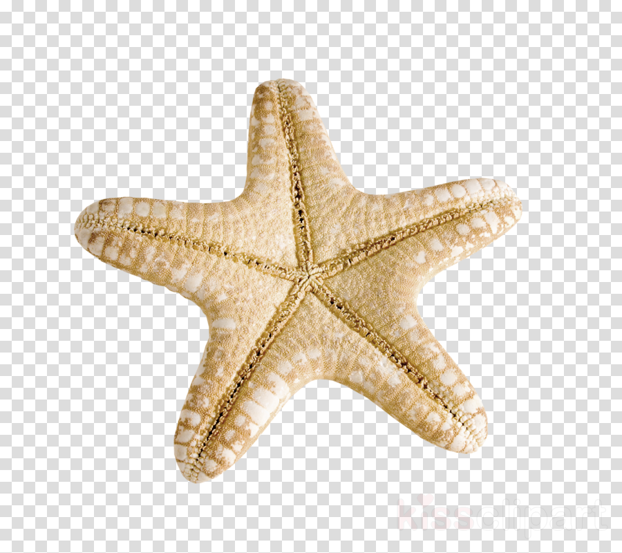 Starfish Image Illustration Leather star Vector graphics
