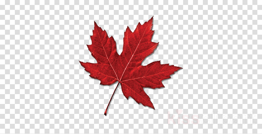 Red maple Maple leaf Portable Network Graphics Clip art