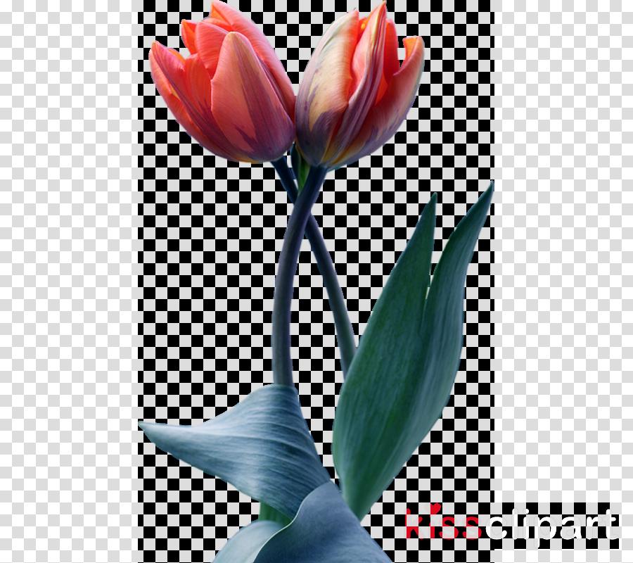 Flower Blog Image Floral design Tulip