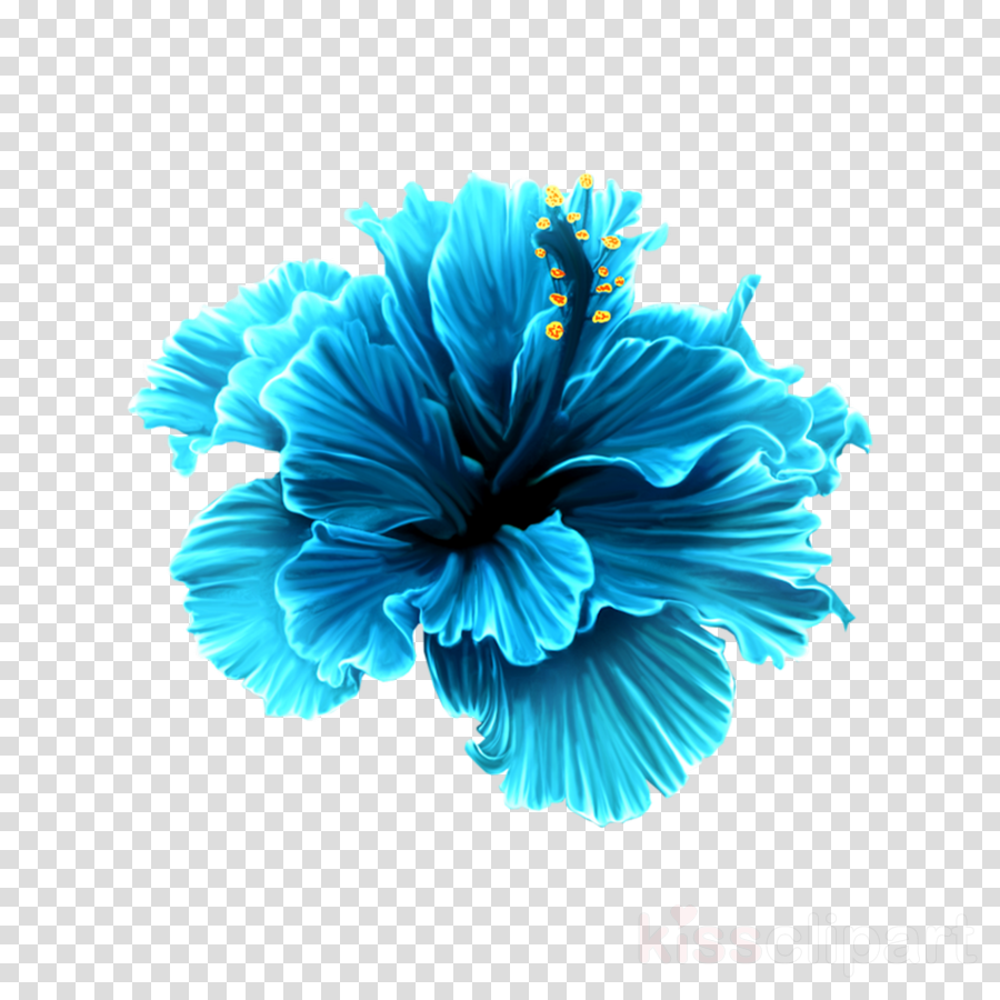 Flower Clip art Rosemallows Floral design Portable Network Graphics