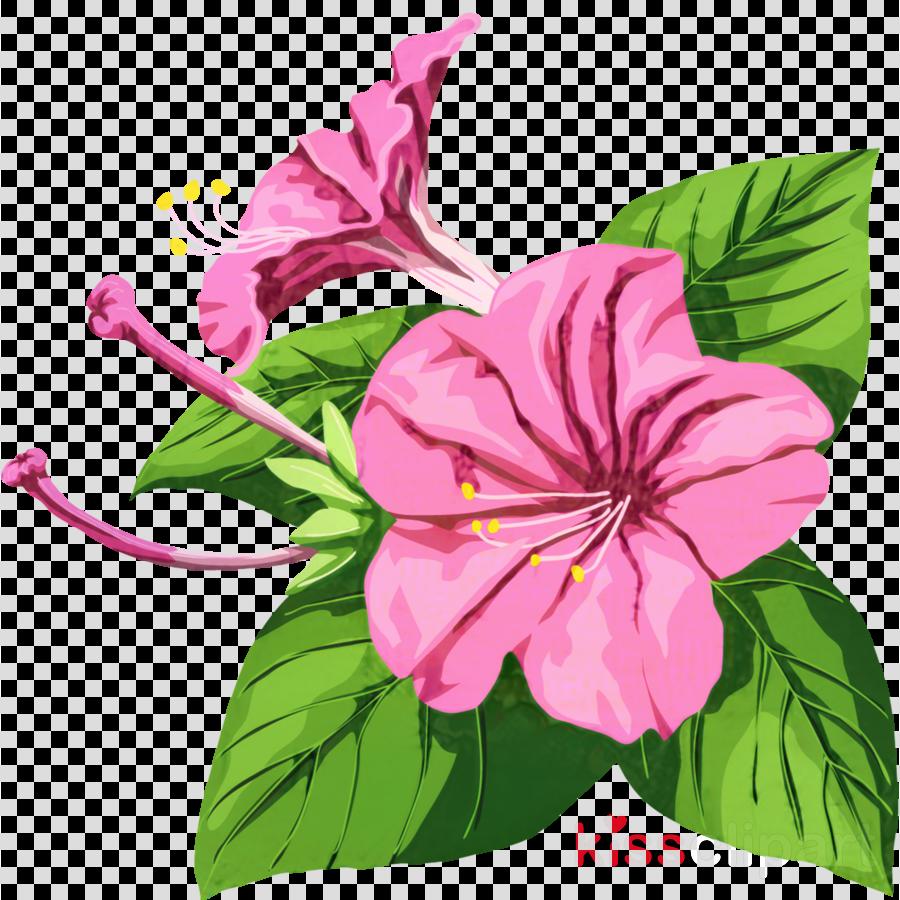 Japanese morning glory Marvel-of-peru Flower Rosemallows
