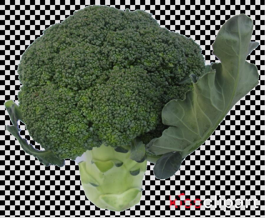 Dr. Almira Manzano Broccoli Mara's Market Fresh Vizcaya Museum & Gardens