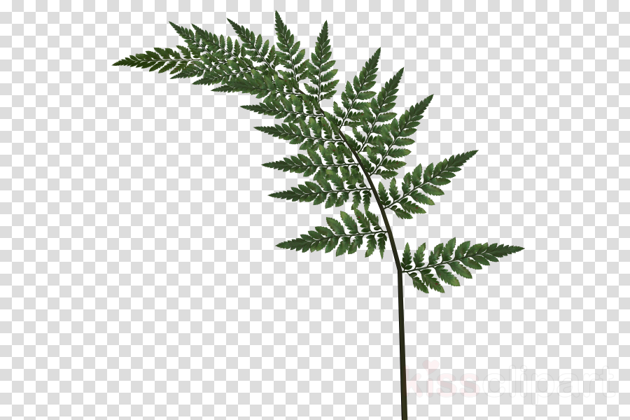 Portable Network Graphics Clip art Image Fern Desktop Wallpaper