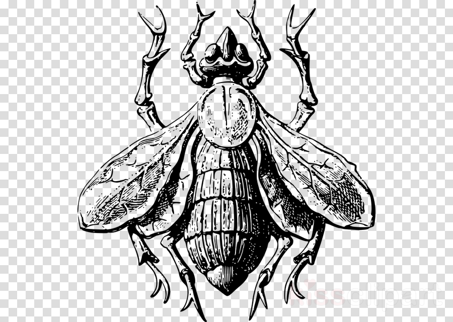 Insect Ant Bee Clip art Butterfly
