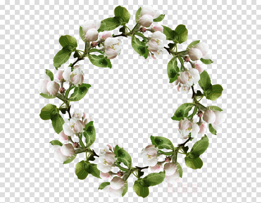 Portable Network Graphics Clip art Image Photography Cherries