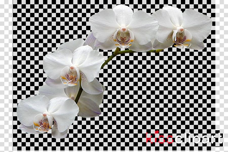 Orchids Adobe Photoshop Clip art Flower Portable Network Graphics