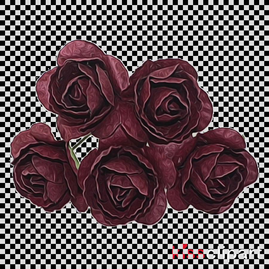 Garden roses Cut flowers Flower bouquet Petal