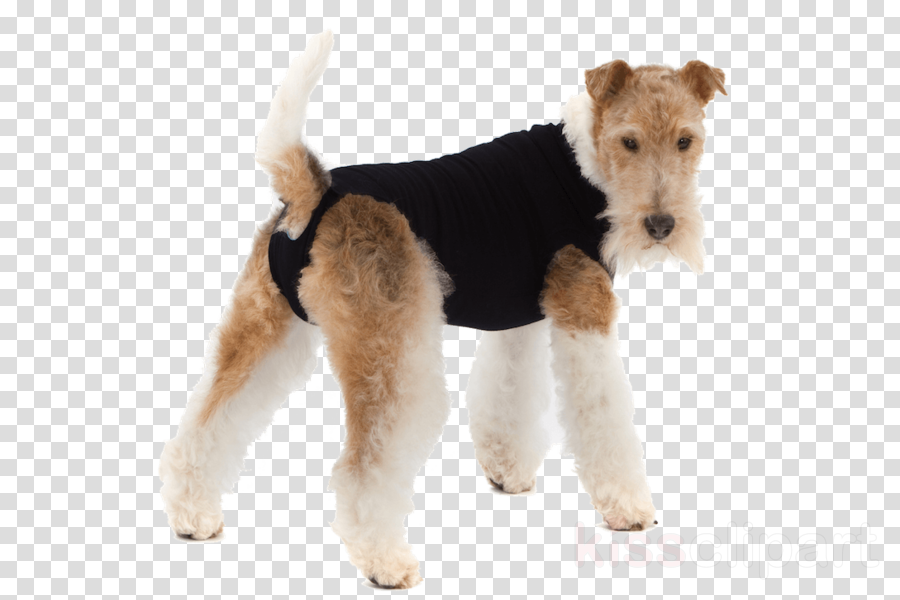 Suitical Recovery Suit For Dogs Dog collar
