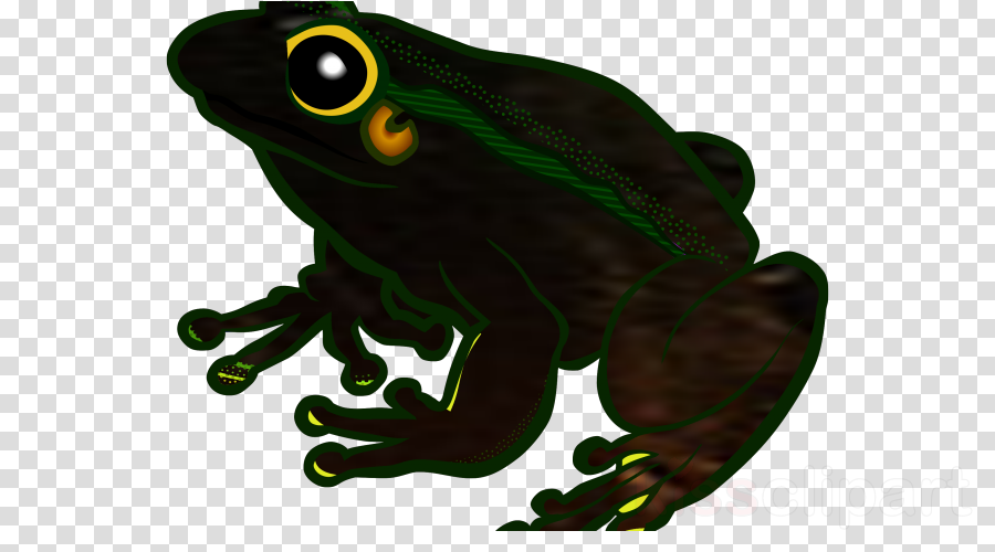 Frog Clip art Portable Network Graphics Transparency Image
