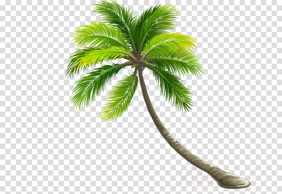 Coconut milk Portable Network Graphics Palm trees
