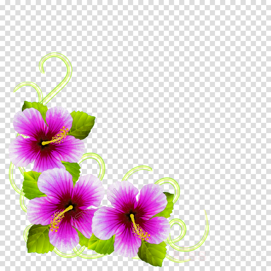 Pansy Purple Hibiscus Mallows Transparent Png Image Clipart
