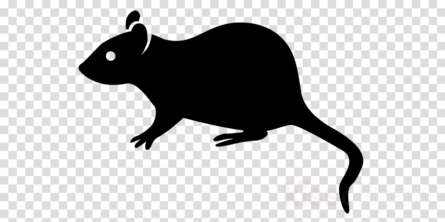 Rodent Brown rat Clip art Black rat Pest