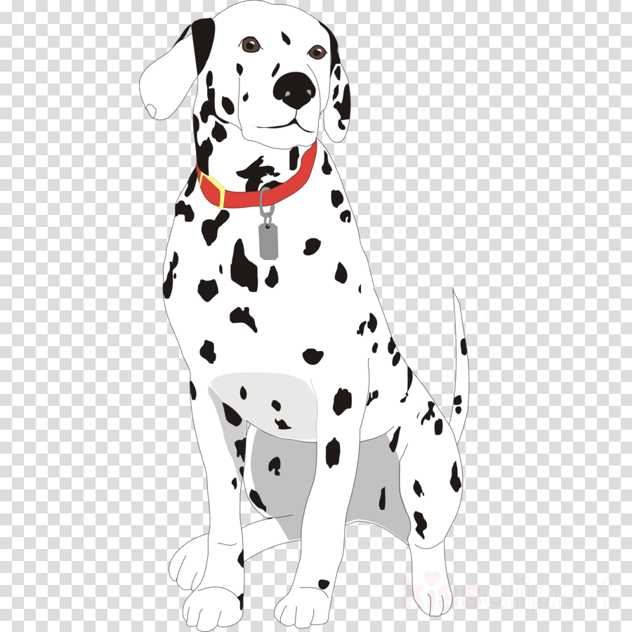 Dalmatian dog Puppy Drawing Clip art Dog breed