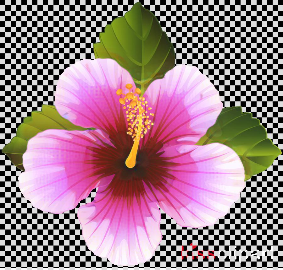Clip art Portable Network Graphics Shoeblackplant Purple Hibiscus 7.19