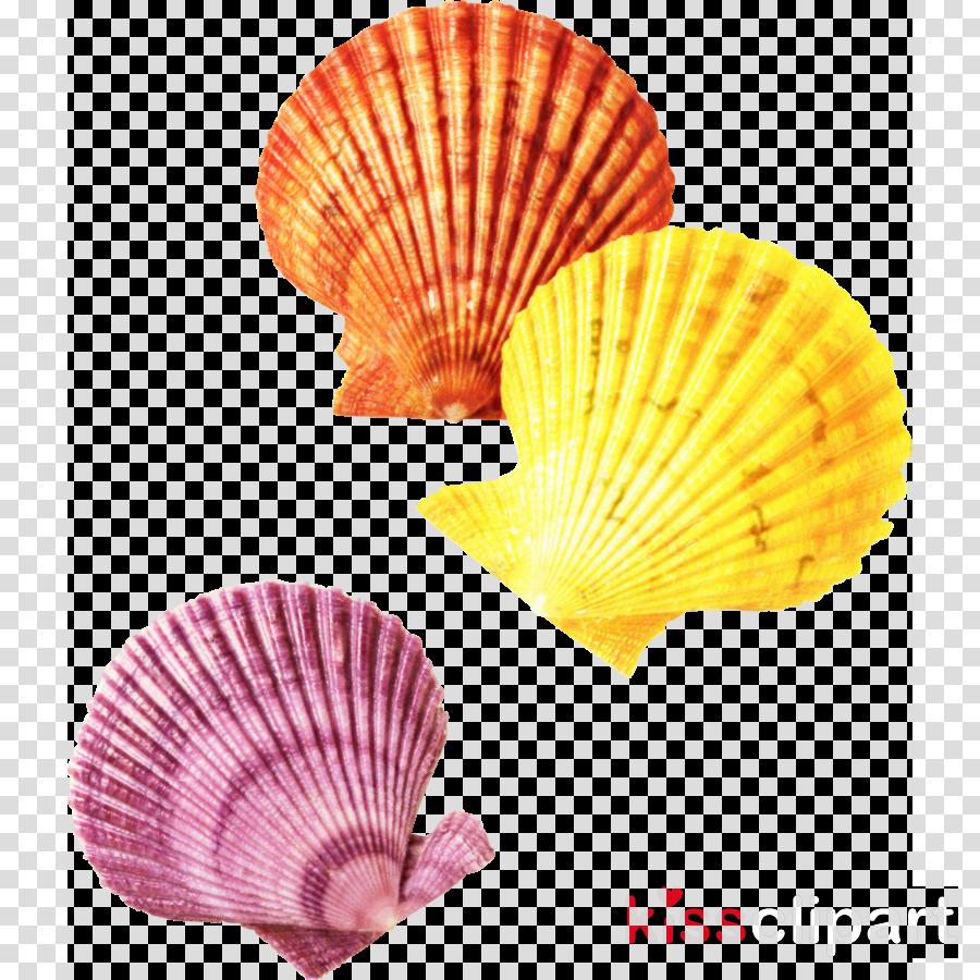 Seashell Conchology