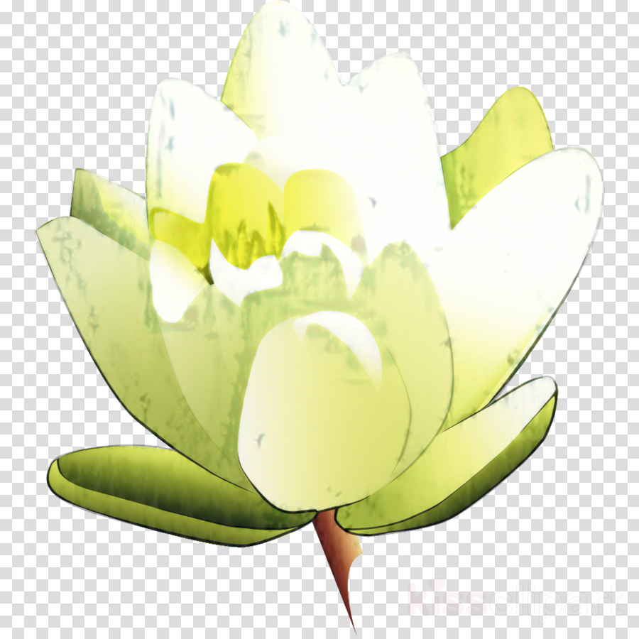 Clip art Flower Free content Openclipart Easter lily