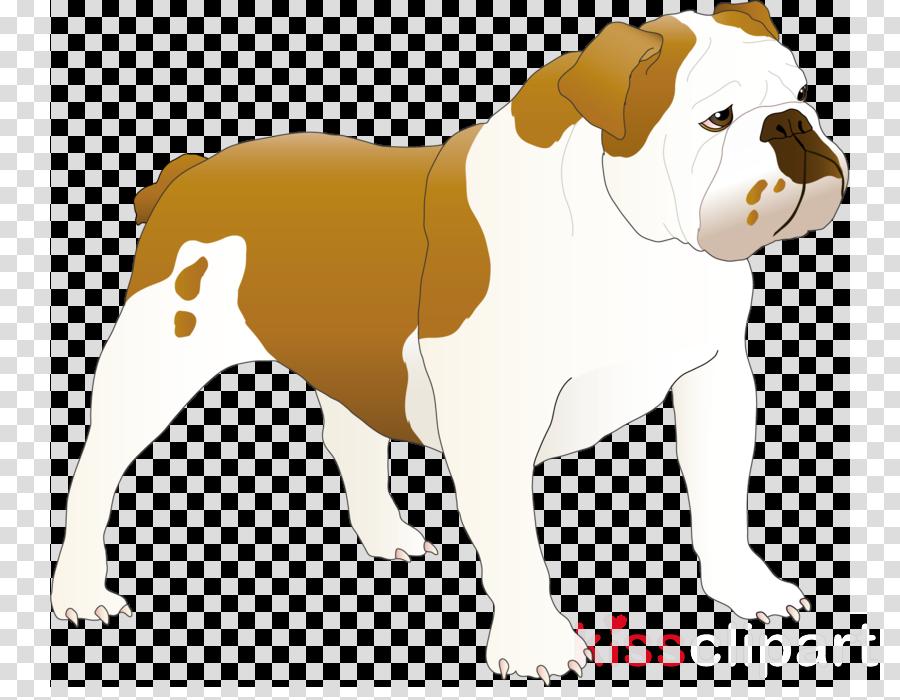 Old English Bulldog Toy Bulldog Puppy Dog breed