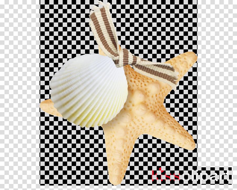 Portable Network Graphics Clip art Starfish Vector graphics Image