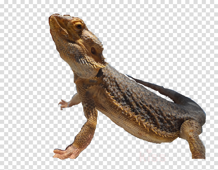 Agamas Velociraptor Jurassic Park Amphibians Transylvania