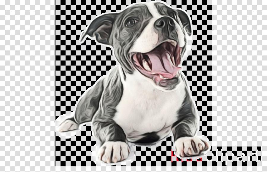 American Pit Bull Terrier Shih Tzu Boston Terrier Puppy
