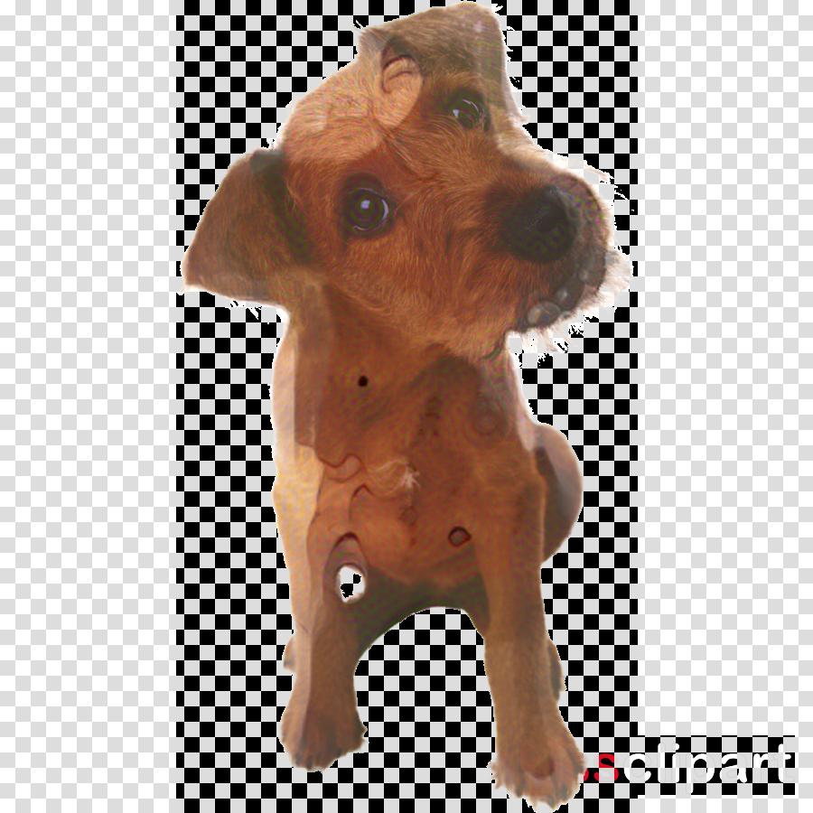 Puppy Golden Retriever Cat Pet Clip art