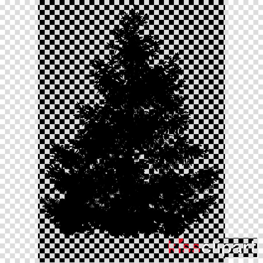 Pine Fir Norway spruce Larch