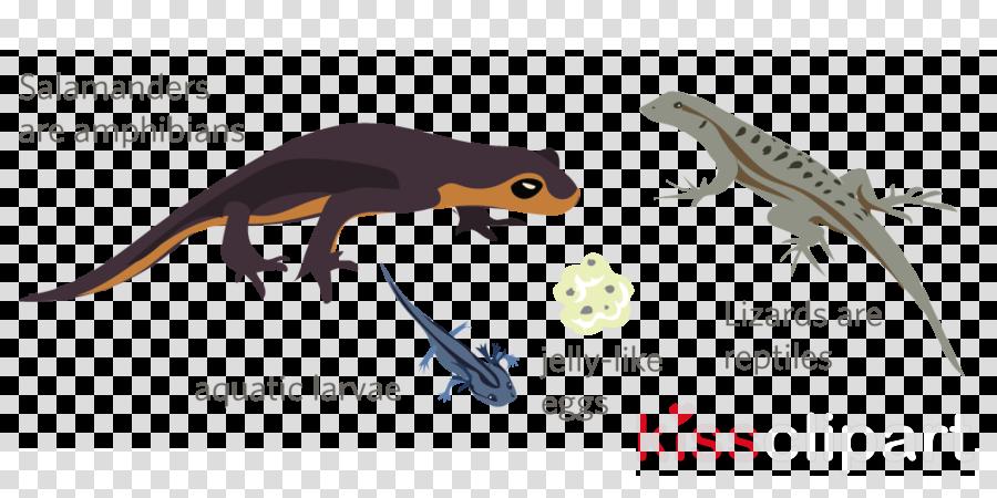Marbled salamander Lizard Newt Clip art