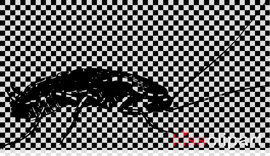Cockroach Beetle Weevil Drawing Nursery rhyme