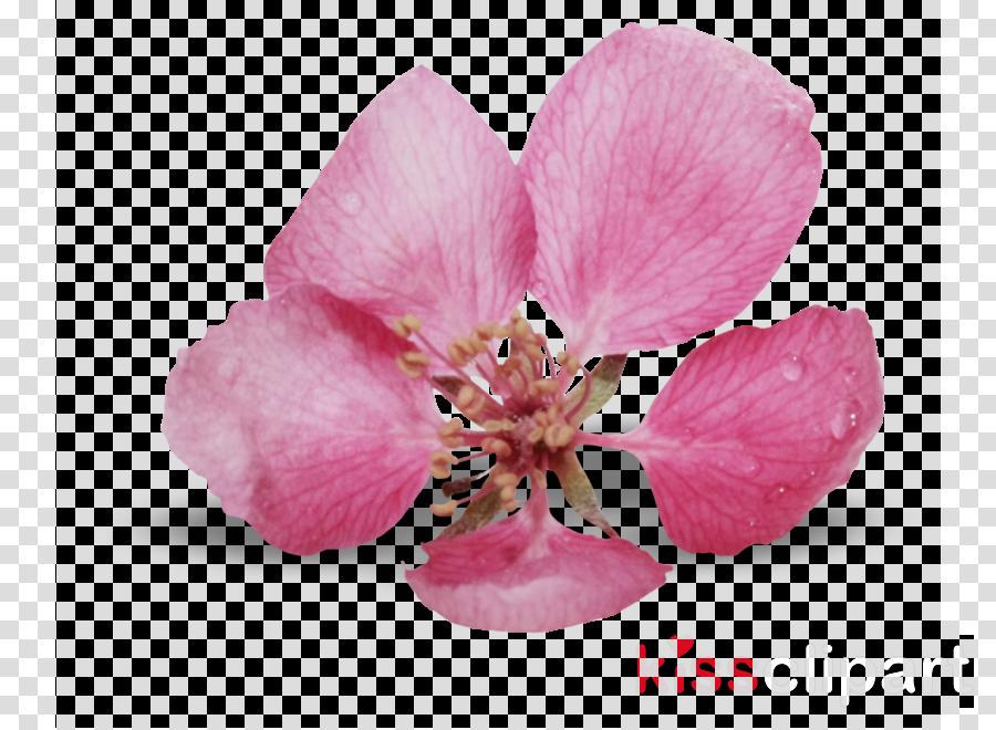 Petal Blue rose Flower bouquet
