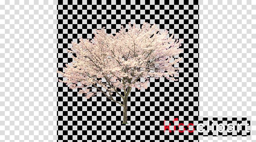 Portable Network Graphics Blossom Tree Clip art Cherries